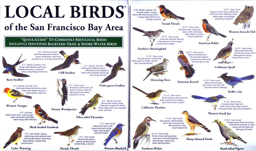 Local birds of the San Francisco Bay Area pocket-guide