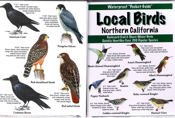 Local Birds of Northern California Pocket-Guide