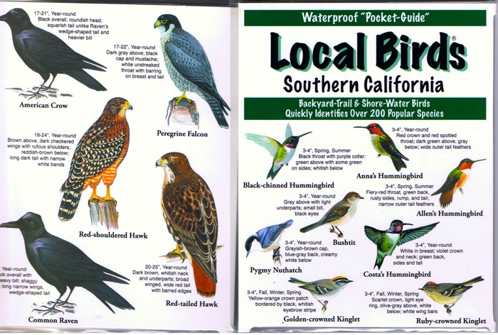 Local birds of Southern California Pocket-Guide