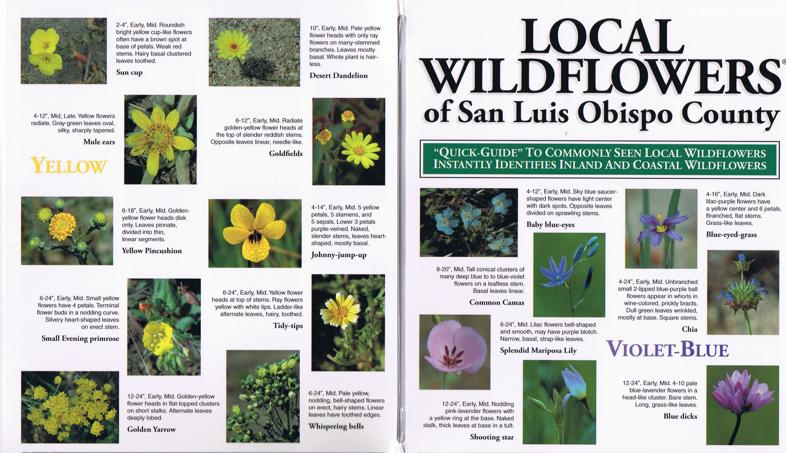 Local Wildflowers of San Luis Obispo Pocket-Guide