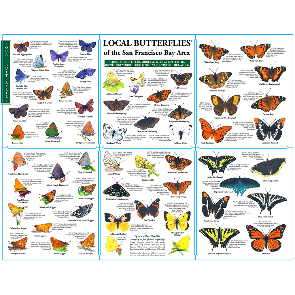 Local Butterflies of Northern California Pocket Guide