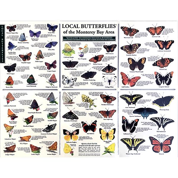 Local Butterflies pocket guide