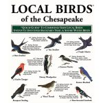 Local birds of the Chesapeake Pocket Guide