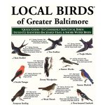 Local Birds of Greater Baltimore pocket-guide