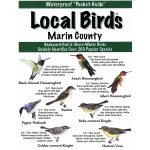 Marin County Birds Pocket-Guide