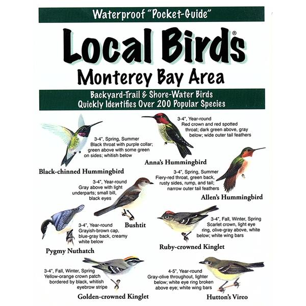 Monterey Bay Birds Pocket-Guide