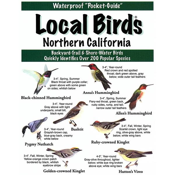 Northern California Birds Pocket-Guide