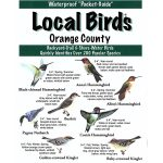 Orange County Pocket Bird Guide