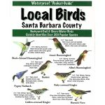 Santa Barbara Birds Pocket-Guide