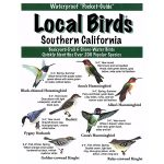 local birds - southern california