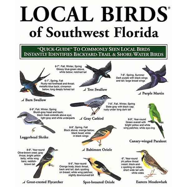 local birds of southwest Florida pocket-guide