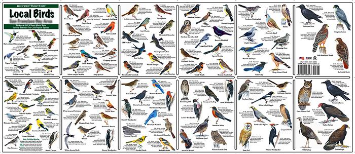 local birds pocket-guide