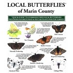 Butterfly Pocket Guide Marin County
