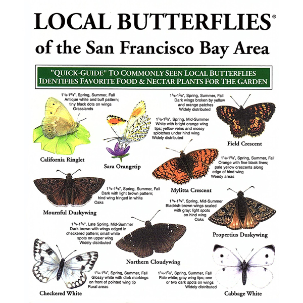 Butterfly Pocket-Guide San Francisco Bay Area