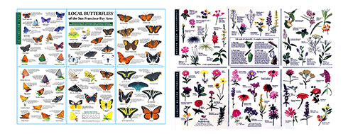 Local Butterflies of Northern California Pocket-Guide