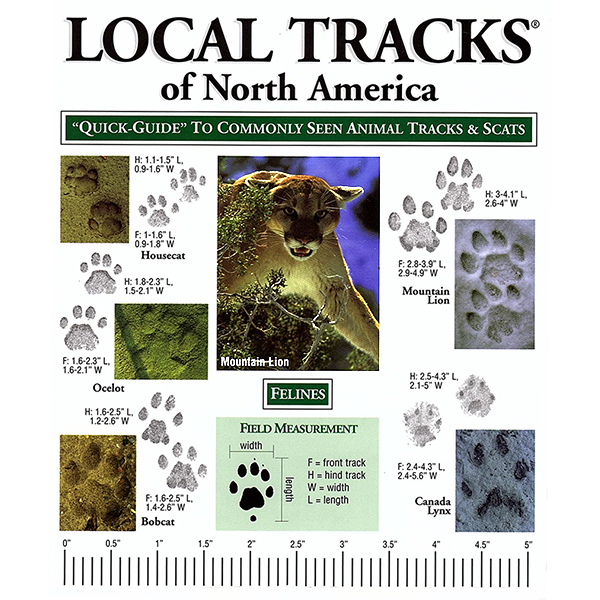 Local Animal Tracks of Northern America Pocket-Guide